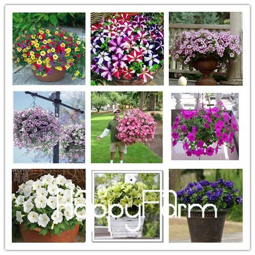 400 seeds / pack, Mix Garden Petunia Shuttlecock Flower Horn Bonsai Flower Seed,#HOEJS9(China (Mainland))