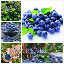 Big promtion .200 Top Hat Blueberry bush Seeds ,Great DIY Home Container Bonsai rich in Anthocyanin(China (Mainland))