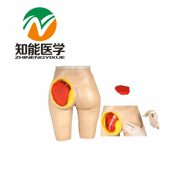 BIX-H4T advanced Anatomical structure hip muscle injection model U.S.A. free shipping<br><br>Aliexpress