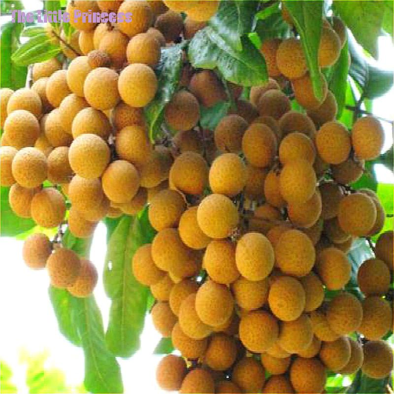 Online buy wholesale tropical fruit tree from china for A perfect 10 nail salon rapid city