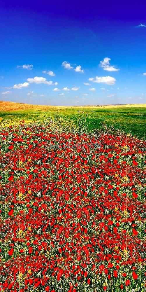 Фотография Tender Flowers 10