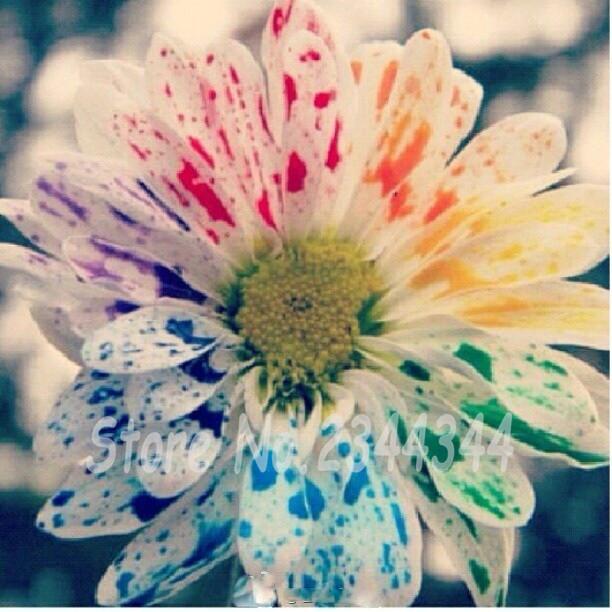 Amour arc en promotion achetez des amour arc en for Aquarelle fleurs livraison gratuite
