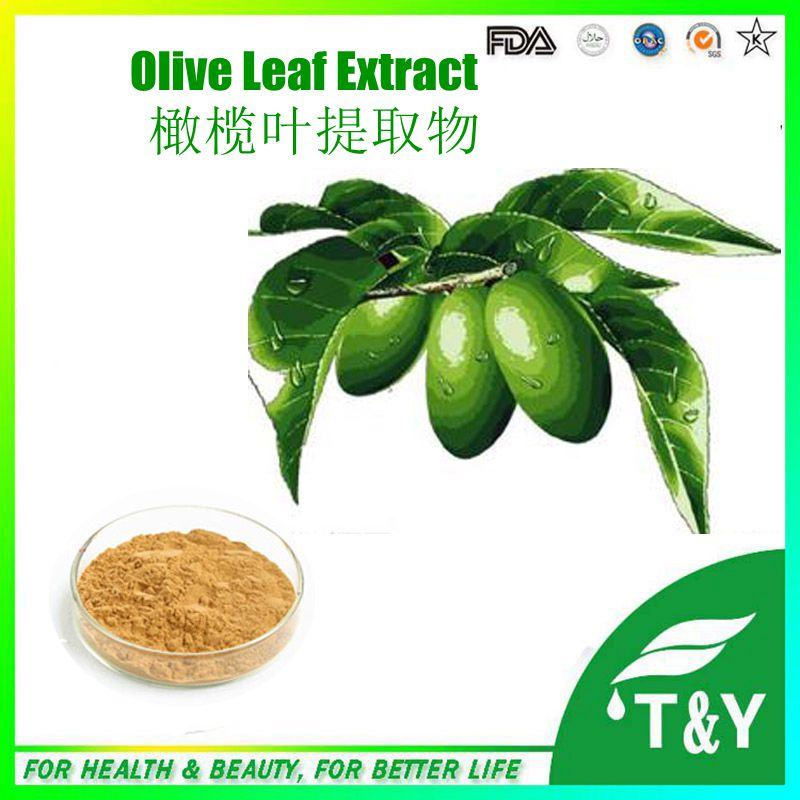 GMP factory supply best popular high quality Hydroxytyrosol Oleuropein Olive Leaf Extract 1000g/lot<br><br>Aliexpress