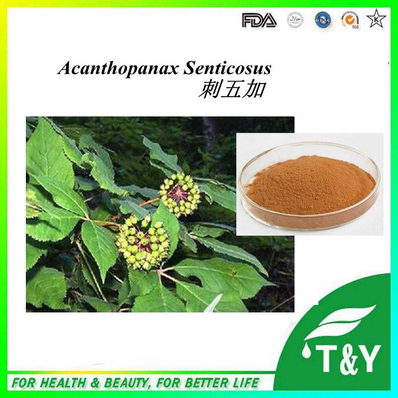 HOT selling Siberian Ginseng extract/free sample Acanthopanax senticosus powder/low price Eleutheroside(B+E) extract 300g