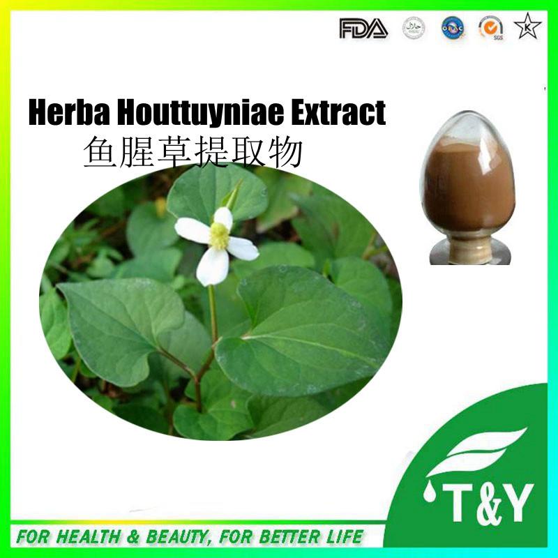 Herba Houttuyniae extract/Heartleaf Houttuynia Herb/Houttuynia cordata 300g/lot