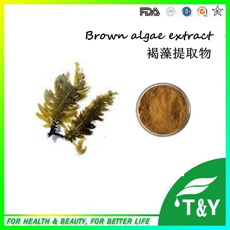 Pure organic fucoxanthin powder from brown algae extract with competitive price 700g/lot with free shipping