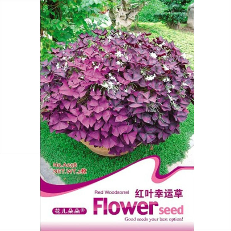 Red Wood sorrel Seed(Bulb) * Red Oxalis * Shamrock * Sorre Bulb * Tender Perennial Flower Herb * Free Shipping(China (Mainland))