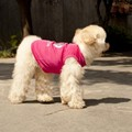 Fashion Clothing Products Creative Green Household Pet Puppy Summer Vest Breathable Polyester Crown Pet Clothes