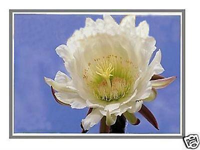 "Фотография 15.6"" LAPTOP LED LCD SCREEN FOR TOSHIBA L755-S5151 HD NEW"
