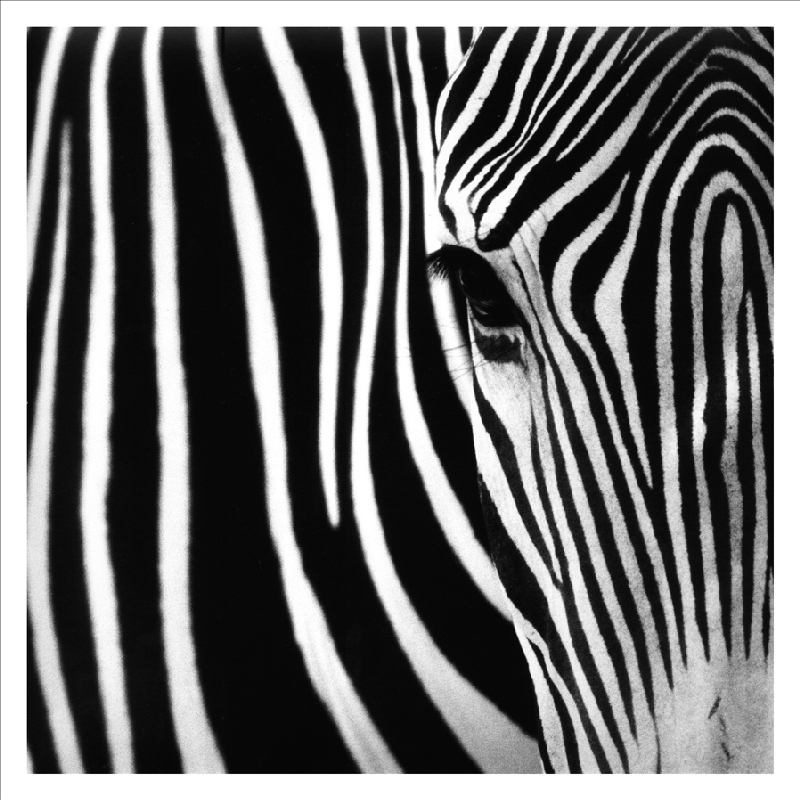 Wholesale canvas prints black and white painting printed for Black and white mural prints