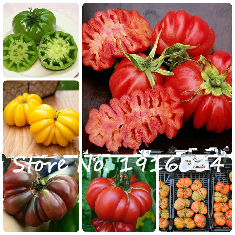 Vegetables seeds Tomato 'Marmande' RARE Seeds - 100 TOP Quality Seeds, household gardening DIY, free shipping!(China (Mainland))