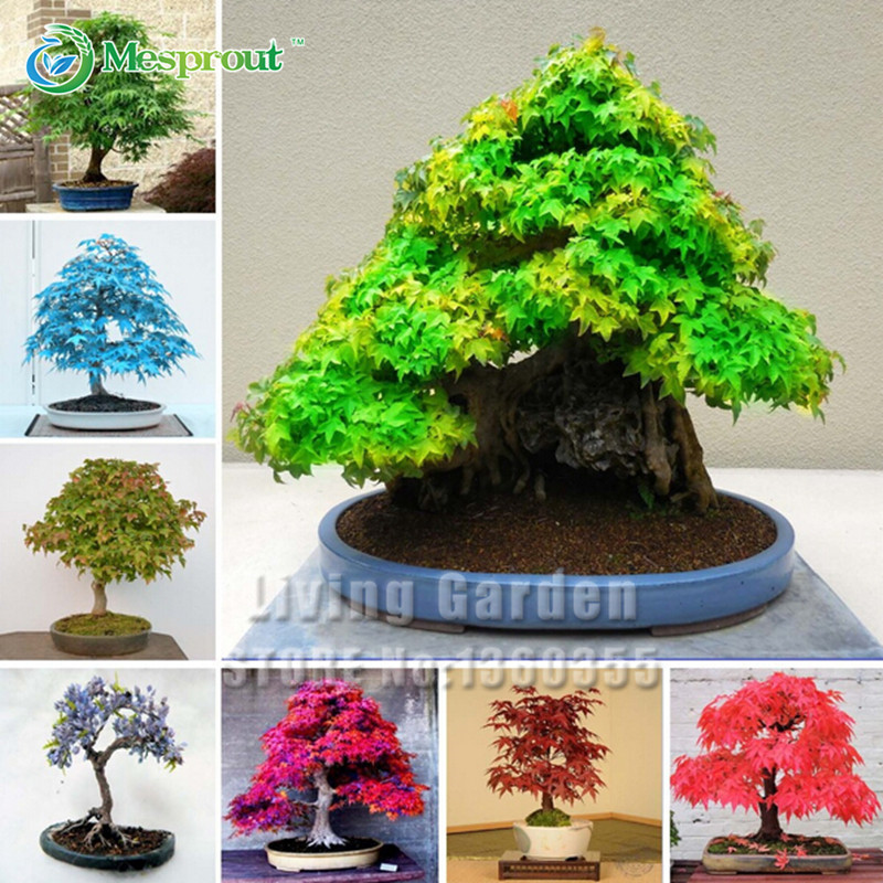 8 Kinds Bonsai Tree Seeds Rare Maple Seeds Plants Pot Suit for DIY Home Garden Maple Seeds - 20 PCS / Bag(China (Mainland))