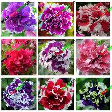 free shipping Flower bonsai seeds flower plant bonsai indoor petunia petals flower seeds bonsai balcony  -200 pcs
