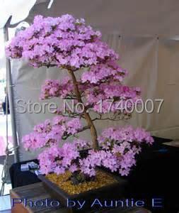 10pcs/bag petunia seeds decoration room,rare bonsai seeds sent gift(China (Mainland))
