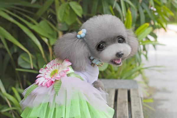 10pcs/lot doggy dress pet dog cat clothing dogs cats fashion tutu lace dresses doggy costume skirts XS S M L XL(China (Mainland))