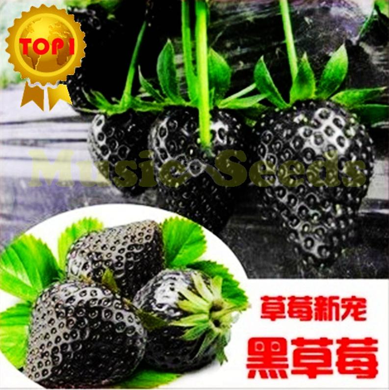 Acquista all 39 ingrosso online pianta di fragola da for Piante fragola vendita