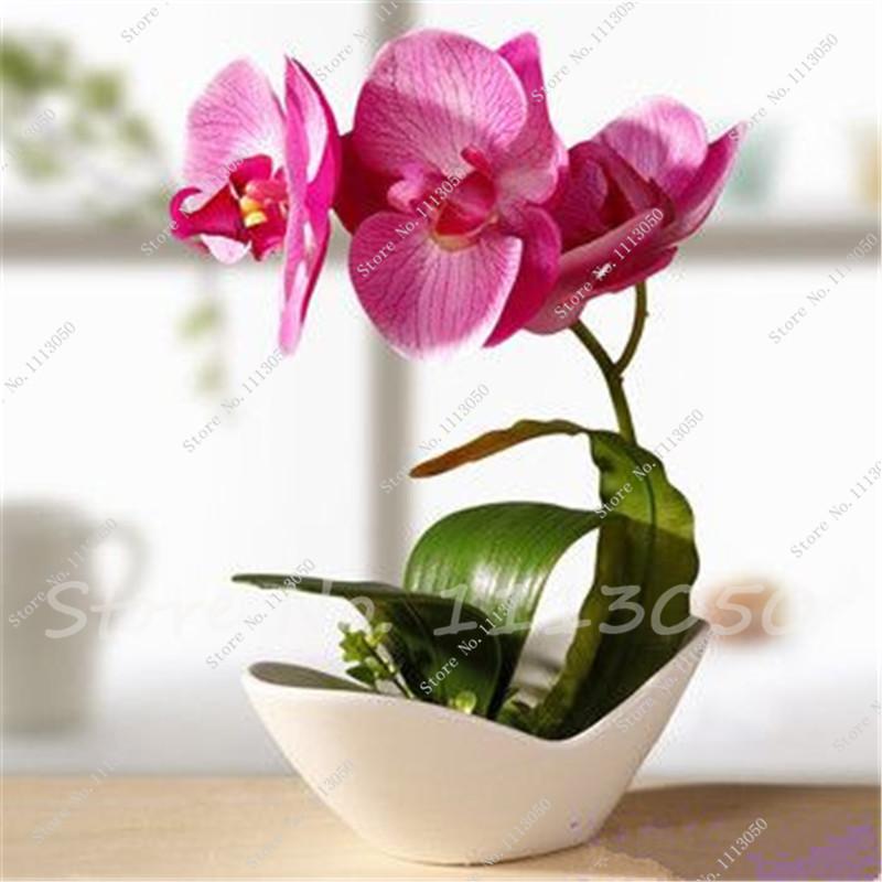Indoor piante di orchidee acquista a poco prezzo indoor for Piante a poco prezzo