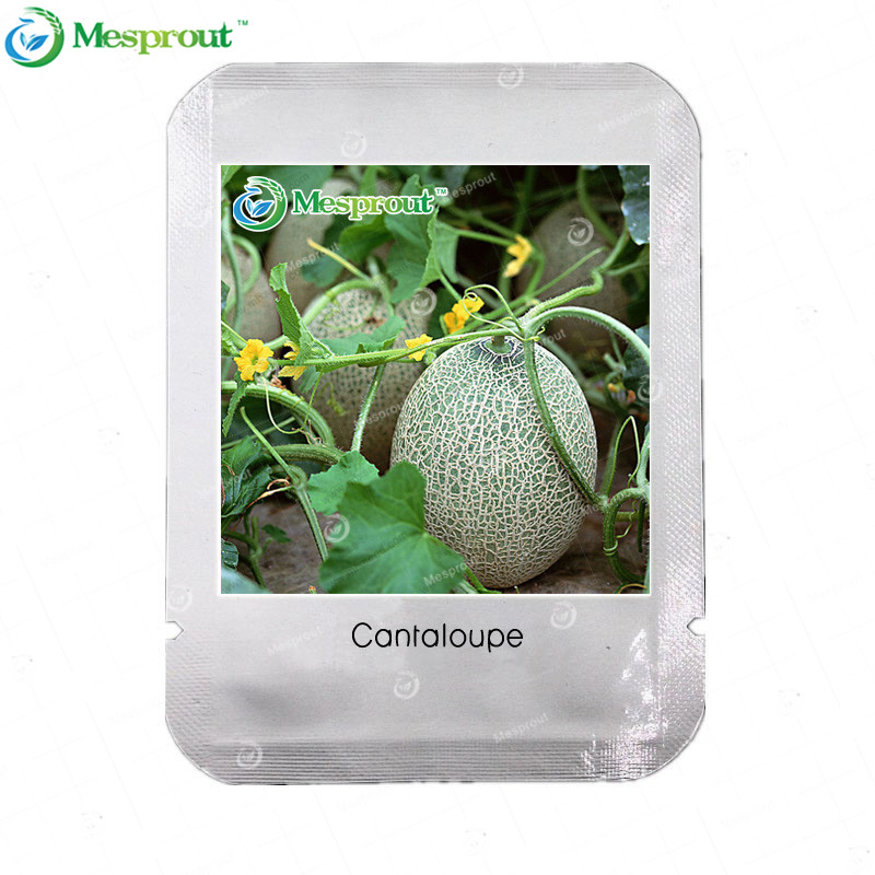 Professional Packing Cantaloupe Seeds Super Sweet Cucumis Melo Hami Melon Seeds Organic Fruits 20 PCS