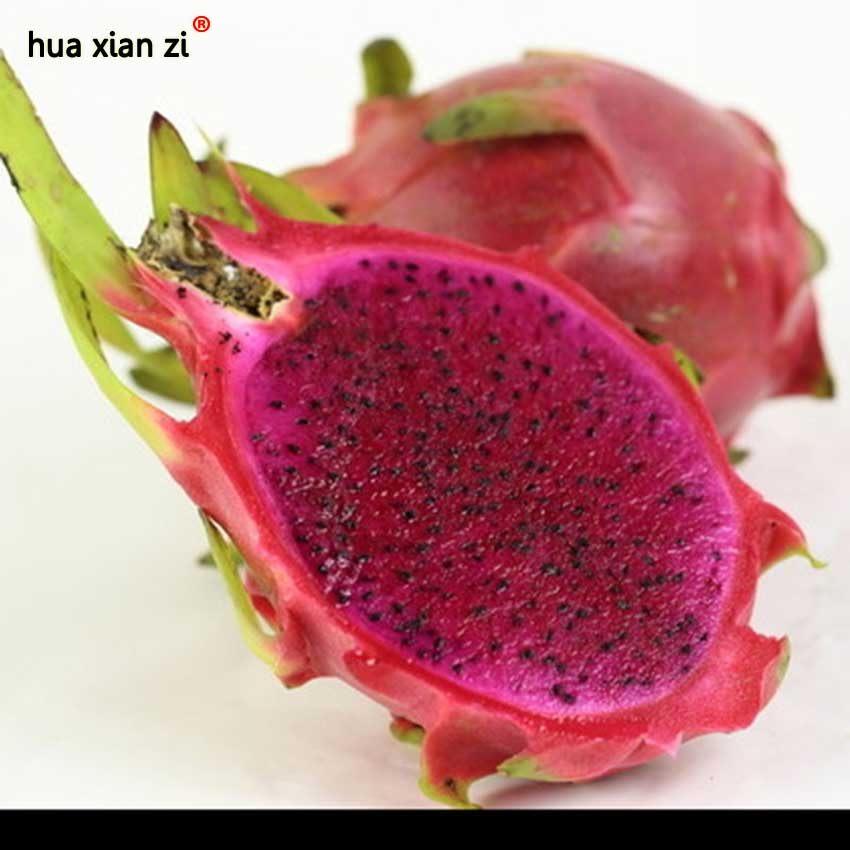 how to grow dragon fruit from seed at home
