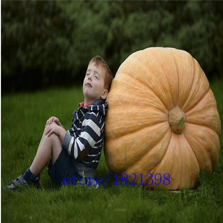 Free shipping 20 seeds pack Atlantic Giant Pumpkin Seeds vegetable seeds