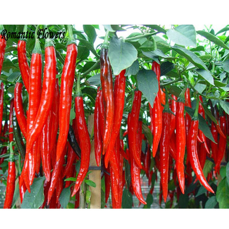 Hot Selling Long Red Pepper Seeds,Red Hot Pepper Seeds ,Vegetable Seeds Free Shipping -50 Particle/bag(China (Mainland))