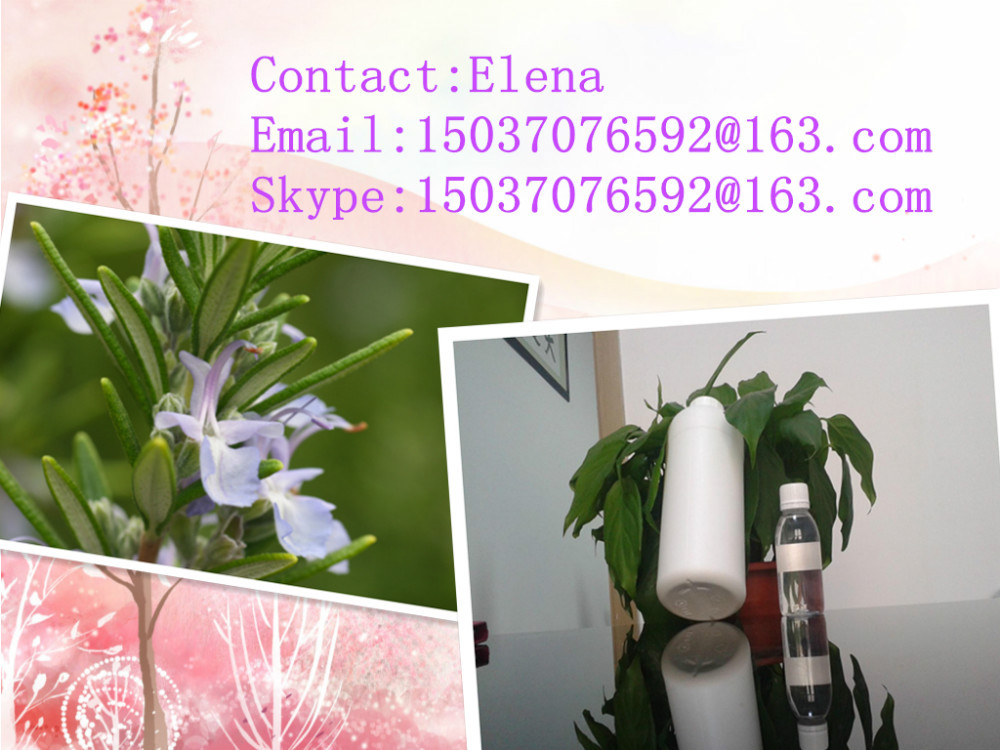 We hot sell high quality Rosemary flavor(China (Mainland))