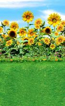 2015 children studio photography background photo background paper On the green grass sunflower theme of 9953