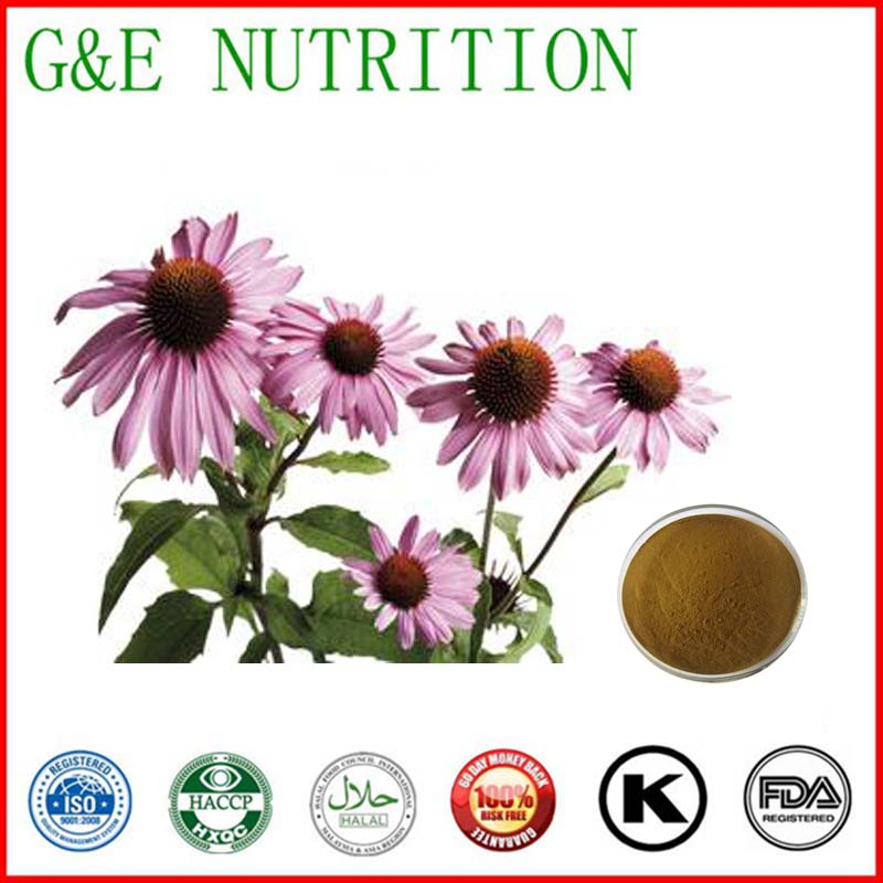 ISO Factory supply Echinacea extract 1KG free shipping<br><br>Aliexpress