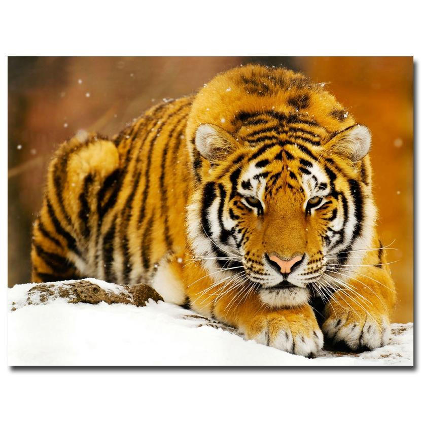 Tiger Winter Nature Art Silk Poster Print 13x18 24x32 inches Landscape Pictures For Home Room Decor  003