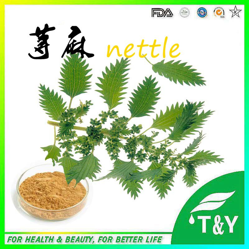 100% Natural Stinging Nettle leaf extract Nettle extract<br><br>Aliexpress