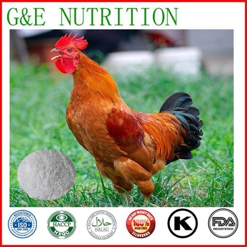 Best price chicken cartilage collagen powder 1000g<br><br>Aliexpress