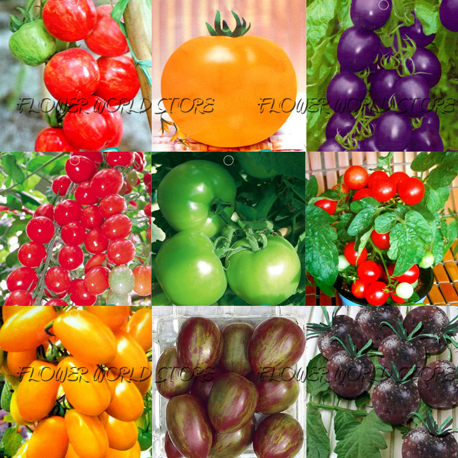 12 KINDS 240+ Tomato seeds different color flavors Purple Red Yellow Green Small Tomato seed Food Bonsai Fruit Vegetable Potted(China (Mainland))