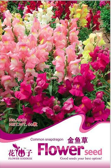 Promotional common snapdragon seeds,Dragon's month seed,Garden flower seeds Antirrhinum,about 100 particles / pack(China (Mainland))