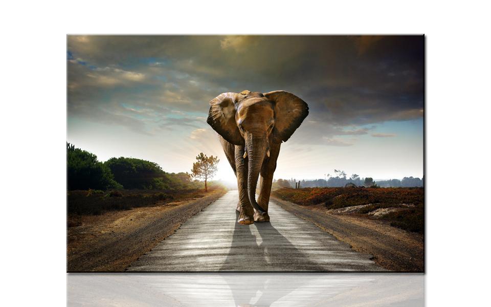 print outdoor elephant