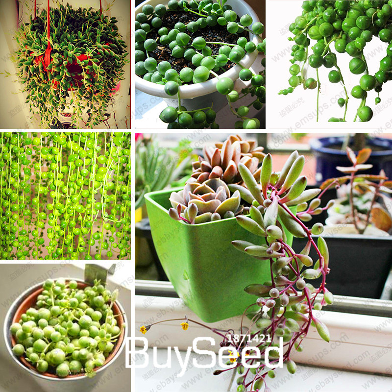Tall Plant Pots For Indoor Plants Images