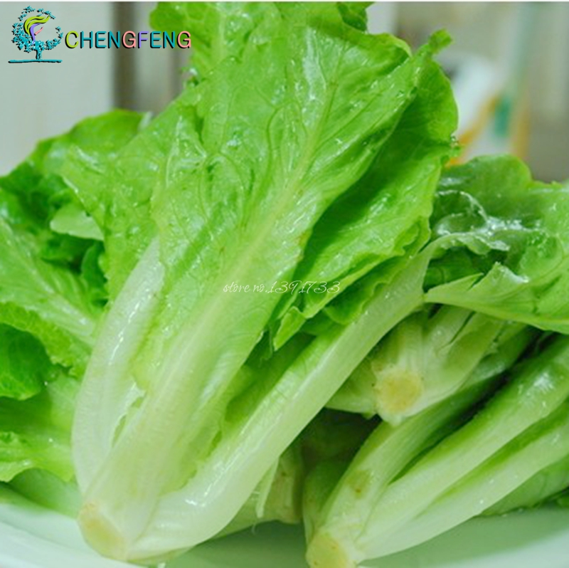 I want butter lettuce seed germination of vegetable seeds resistant super soft cold seasons can be broadcast 120 / pack Free Shi(China (Mainland))