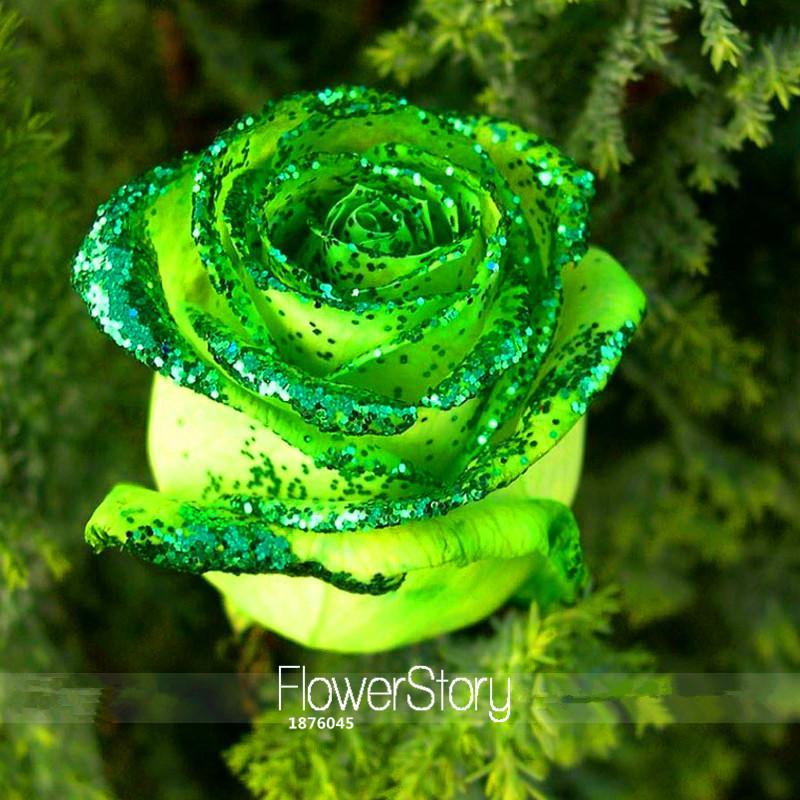Loss Promotion!Golden Green Rose Seeds, Professional Pack, 50 Pcs / Bag, Strong Fragrant Garden Rose Flowers,#FFP2P4(China (Mainland))