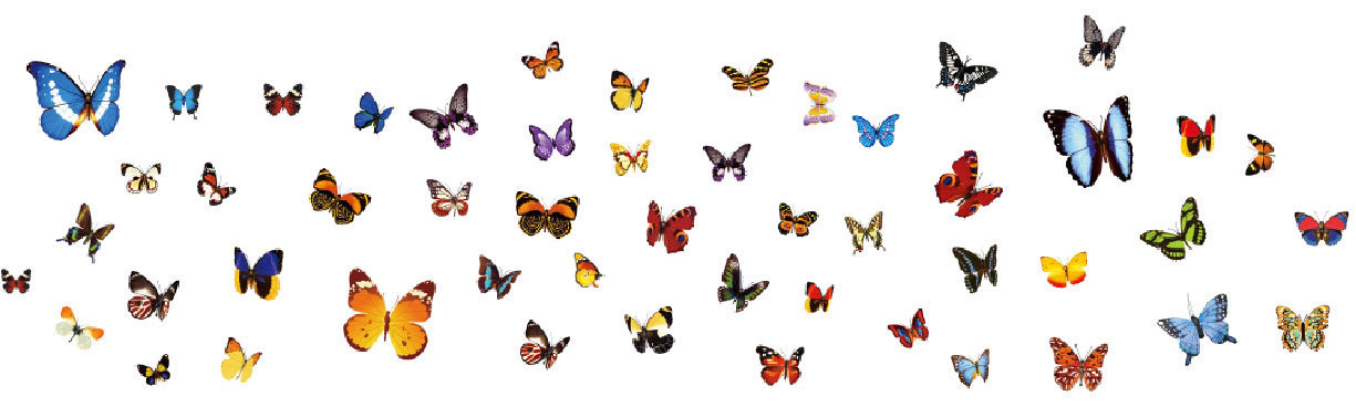 AY1043A butterfly color transparent paste fashion Home Furnishing small decorative special(China (Mainland))