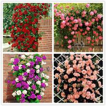 100 pcs Climbing Rose seeds, rare rose flowers seeds in bonsai, DIY Home Garden Courtyard Pot Flower Plant Multi-color selection(China (Mainland))