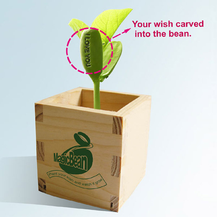 Free shipping 4pcs/lot ,Hot sale magic seeds,wooden beans ,growing message beans,natural green home plants.home decoration(China (Mainland))