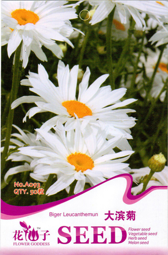 Buy 2 Get 1!(Can accumulate ) 1 Pack 50 Seed Bigger White Chrysanthemum Garden Flower Seeds A093 - Life Store store
