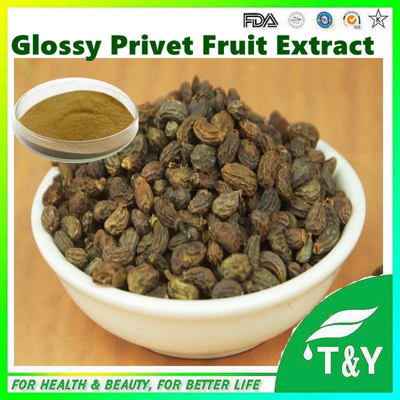 Ligustrum lucidum extract Oleanolic acid / Glossy Privet Fruit Extract