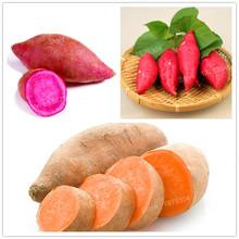 100pcs/bag sweet potato seeds Vegetables Seeds fresh food Fruit And Vegetable Garden Supplies bonsai plant for home garden(China (Mainland))