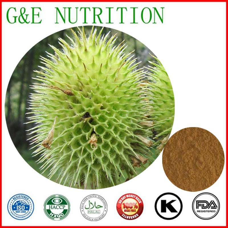 Factory Supply Himalayan Teasel Root Extract 1000g