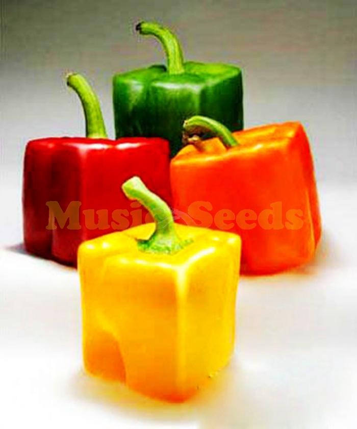 1 saco = 200 pcs vente chaude graines de poivre arc douce semences de légumes herbe bonsaï cadeau bricolage jardinière pour maison & jardin livraison gratuite(China (Mainland))