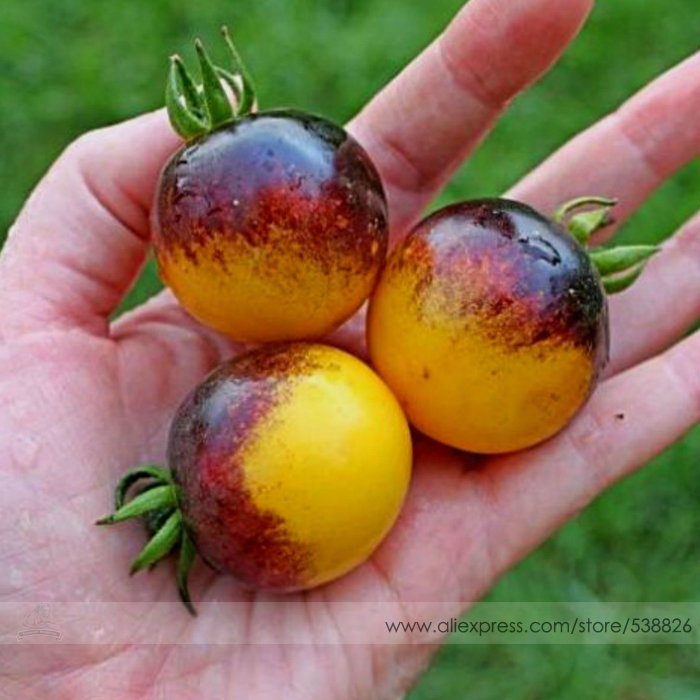 Very Rare Bumble Bee Heirloom Tomato Seeds, Professional Pack, 100 Seeds / Pack, Low Acid Organic Tomato 100% Tree Seeds #NF571(China (Mainland))