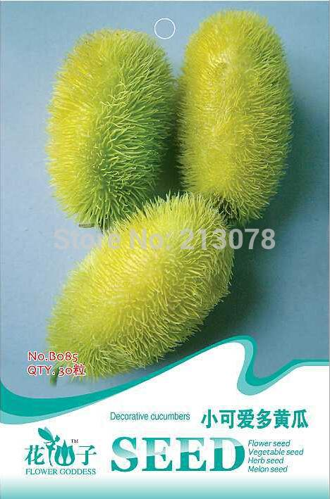 Ornamental fruit seeds decorative cucumbers, little more lovely cucumber seeds,about 30 particles/pack(China (Mainland))