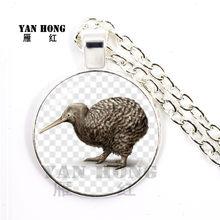 Oiseau étrange de nouvelle-zélande, c'est un oiseau, mais sans ailes, ne peut pas voler, Kiwi, trésor national de la nouvelle-zélande, plus belle peopl(China)