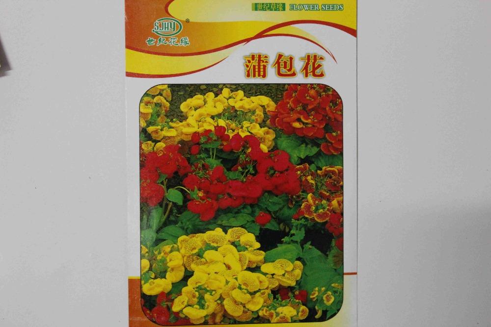 20pcs/original bag Calceolaria Seeds Slipper Flower Seeds Calceolaria herbeohybrida sementes de flores for flower pots planters(China (Mainland))