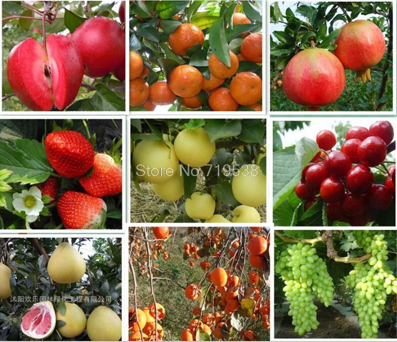 Apple pear grape fruit seed orange cantaloupe watermelon strawberry and so on 13 kinds of selection 10seeds/bag(China (Mainland))